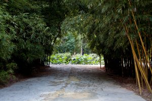 Palermo Botanical Garden